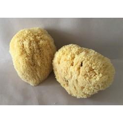 Natural Mediterranean Sponge 18/20cm lot of 3