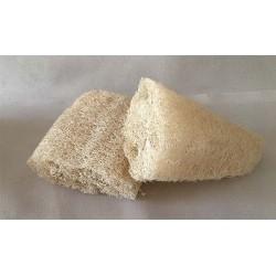 Vegetable Sponge Lopha 11/14cm lot of 6