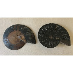 Ammonite cleonidas cut in 2 sold by 1