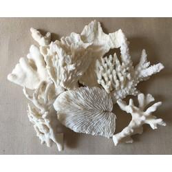 Coral block 20/30cm matched per kilo (about 2 Pieces/kilo)