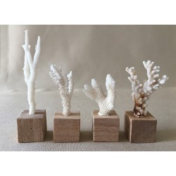 Mini corals on pedestal 8/10cm lot of 6