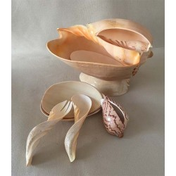 Salad service in Melo - 7 pieces lot of 1