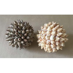 Pose ball covered with Babylonia/batilaria 12cm lot of 6
