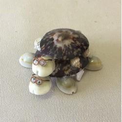 Turtle Double Patelle 7cm lot of 12