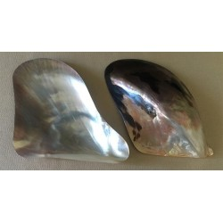 Pteria polished 12cm by 12