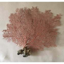 "Gorgon red lace 25/30cm (10-14"") by 3"