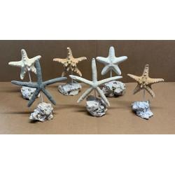 Etoiles de mer assorties sur socle en métal et pierre par 6